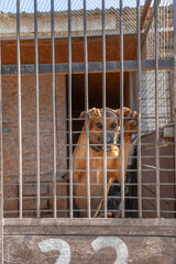 Sad dog from the shelter