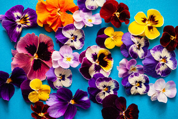 beautiful flowers on the blue background