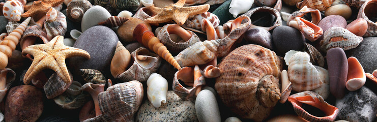 Background and texture of seashells and stones. Panorama. Banner.