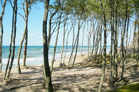Las, plaża, morze, Bałtyk