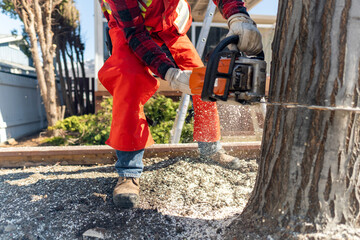 contract worker tree removal with chainsaw