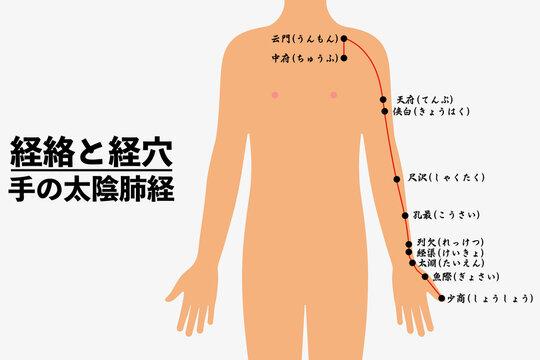 経絡とツボ_手の太陰肺経