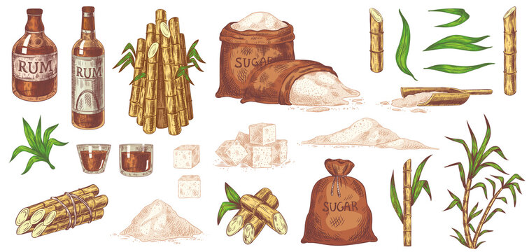 Hand drawn sugarcane and rum. Stalks and leaves plants sugarcane, sugar sack and cubes, glass and bottle of rum vintage sketch vector set. Organic plant and alcohol drink isolated on white