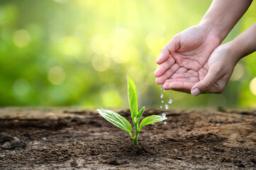 hand Watering plants tree mountain green Background Female hand holding tree on nature field grass Forest conservation concept