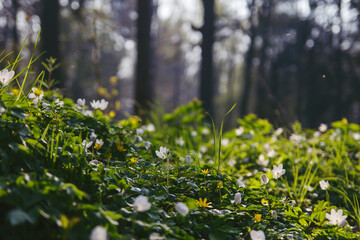 wild flowers in the forest soil