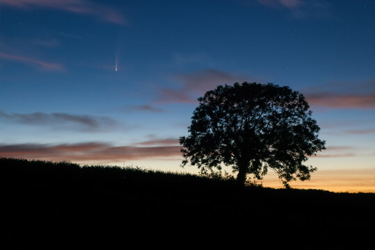 Comet C/2020 F3 (NEOWISE) shining in the dawn skies in the fields with beautiful sky and Ash tree silhouette , Cornwall, UK