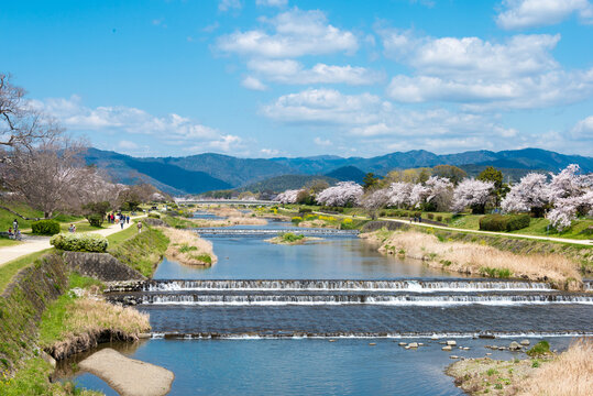 Beautiful scenic view from Kamo River (Kamo-gawa) in Kyoto, Japan. The riverbanks are popular walking spots for residents and tourists.