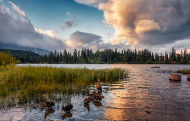 Amazing nature landscape of mountain lake with crystal clear azure water and colorful clouds. Wonderful Autumn scene at sunset. Ducks in the water.  National Park High Tatra. Strbske pleso, Slovakia