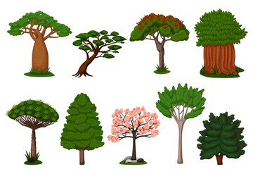 Summer trees set. Isolated dragon, baobab, sakura tree plant icon collection. Vector exotic summer natural flora trees of Africa illustration