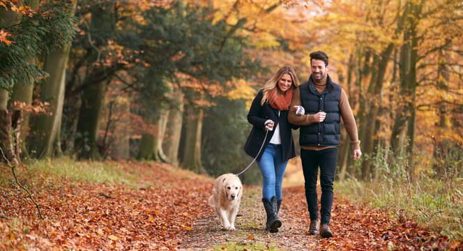 Loving Couple Walking With Pet Golden Retriever Dog Along Autumn Woodland Path Through Trees