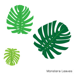 Set of green monstera leaves, Vector plant set, eps10 vector format.