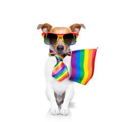 Photo sur Plexiglas Chien de Crazy gay pride dog with rainbow flag