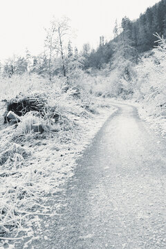 Black and white background with winter landscape of frosted grass and shrubs along pathway in valley against forested mountain slopes