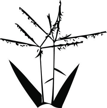 Seeding Grass Silhouette Vector