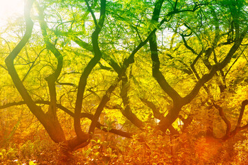 Tuinposter Geel Trees in Colorful Natural Light . Branches in the Sunlight