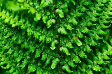 Fototapeten Grun Green fern leaves
