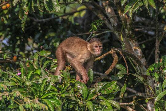 Monkey in tree at Cuyabeno Wildlife Reserve, Amazonia, Ecuador
