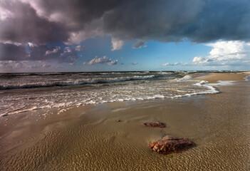 Fototapeta Wyspa Wolin - Woliński Park Narodowy - Międzyzdroje, Międz… obraz