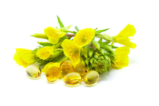 Yellow evening primrose (Oenothera biennis) flowers and capsules with oil on white