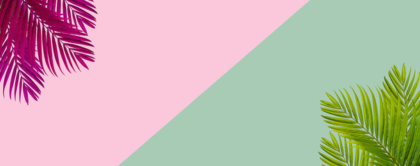 top view of tropical palm leaf on green and pink color background. minimal summer concept. flat lay