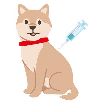 予防接種を受ける犬