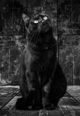 Obraz Siedzący czarny kot - fototapety do salonu