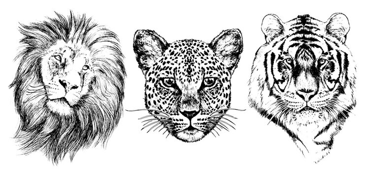 Lion, leopard, tiger, graphic black on a white background