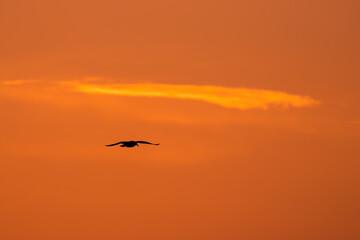 Fototapeta Lecący ptak na tle zachodu słońca - Dolina Baryczy