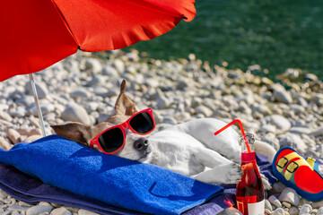 Photo sur Plexiglas Chien de Crazy dog siesta on towel with umbrella and cocktail