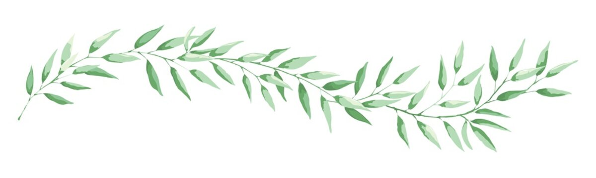 Green leaf -- narrow banner. Long curved branch with narrow leaves, vector illustration, design element.
