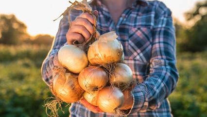 Fototapeta Farmer holds a braid of ripe onion obraz