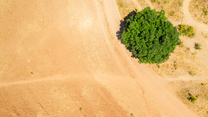 Perpendicular aerial view of a lonely tree in the African desert
