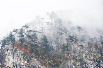 Autumn forest colours in the Carpathians, Romania, Europe - 365298713