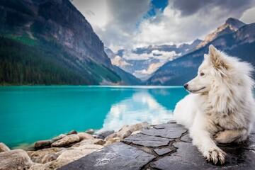 White Dog sitting on the rocks near the mountain large pond