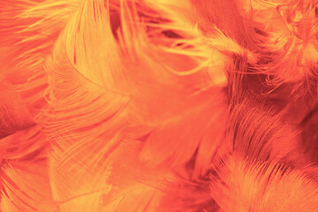 Beautiful orange colors trend feather texture background, trends color