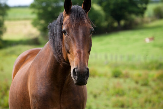 Horse, a hoofed herbivorous mammal of the family Equidae.Before the advent of mechanized vehicles,was widely used as a draft animal and riding on horseback was one of the chief means of transportation