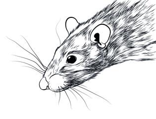 rat pet draw silhouette vector illustration picture