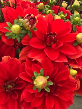 Red flowers in a garden