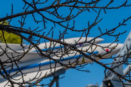 Missiles behind tree branch.