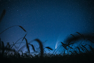 Belarus. 17 July 2020. Comet Neowise C/2020 F3 Shines Bright In The Night Starry Sky Above Young Wheat Field. Night Stars Above Summer Agricultural Field In July Month. Comet At A Distance Of 104