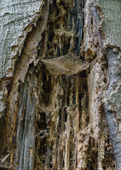 Rough texture of the bark of a rotting tree with spiderweb
