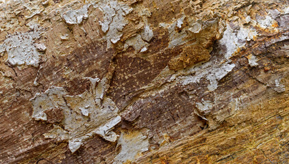 Rough texture of the bark of a split tree