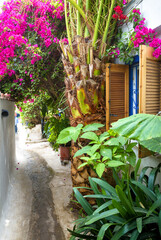 Fototapete - Old narrow street with flowers and plants in Anafiotika, Plaka district, Athens, Greece. Plaka is tourist attraction of Athens.