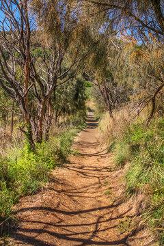 Mount Schank walking trail Mount Schank is a 100 m (330 ft) high dormant volcano in the southeast corner of South Australia, near Mount Gambier.