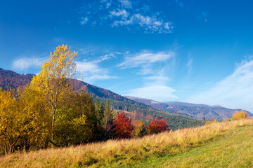 mountain landscape in autumn. forest in fall colors. wonderful nature scenery on a sunny day. meadows rolling in to the distant ridge