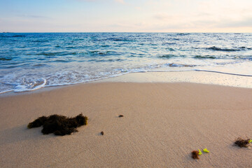 morning on the beach. seaweed on the sand. sunny weather with some clouds. natural calm seascape scenery