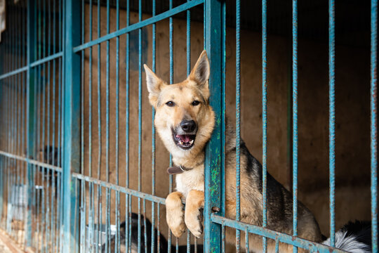 Cage with dogs in animal shelter