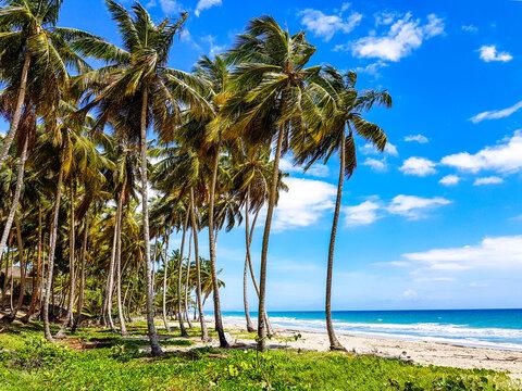 Tropical beach in the caribbean