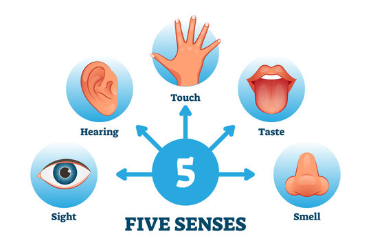 Five senses labeled scheme to receive sensory information vector illustration