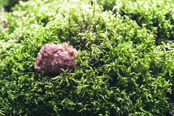 Aragonite on beautiful moss background. Magic stones for rituals, meditation and spiritual practices. Soft focus